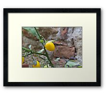 yellow chili Framed Print