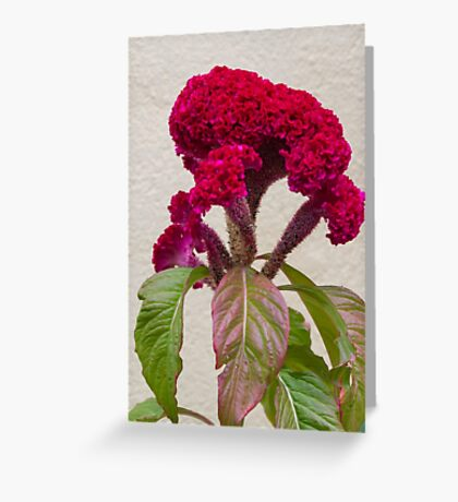 red flower in the garden Greeting Card