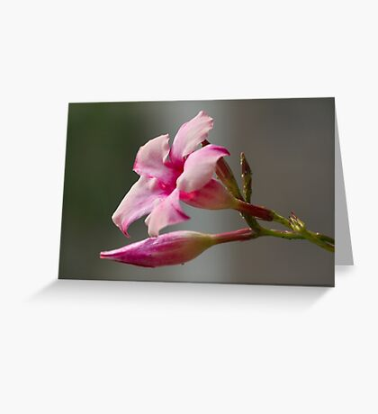 pink flower in the garden Greeting Card