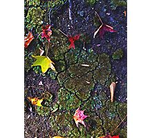 Fall Leaves & Cracked Earth Photographic Print
