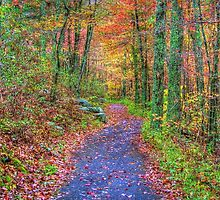 Fall Path by James Brotherton