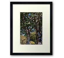 White Bark Framed Print