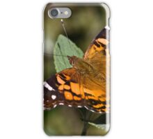 American Painted Lady iPhone Case/Skin
