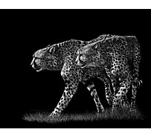 Double Trouble - cheetahs Photographic Print