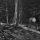 Listen - elk in forest by Heather Ward