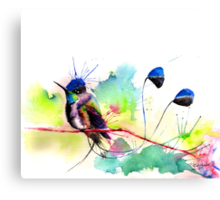 """Spatuletail Hummingbird"" Canvas Print"