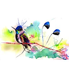 """Spatuletail Hummingbird"" Photographic Print"