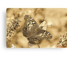 American Painted Lady Sumi-e Canvas Print