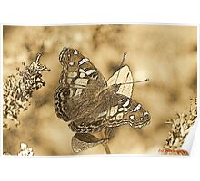 American Painted Lady Sumi-e Poster