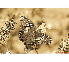 American Painted Lady Sumi-e Photographic Print