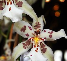 Orchid With Bokeh by Linda  Makiej