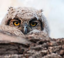 Owlet in the morning by Eivor Kuchta