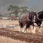 Ploughing its a slow job  by yampy