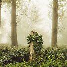 Magic stump by Hudolin