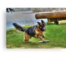 Plush German Shepherd Action Photo Canvas Print