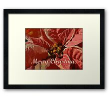 Pink and White Poinsettia Merry  Framed Print