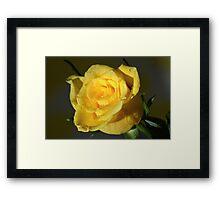 Yellow Rose At Night. Framed Print