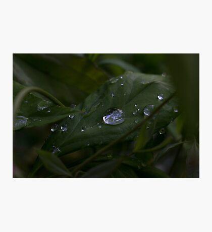Water Droplet Macro Photographic Print