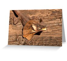 Frill-necked Lizard, Northern Territory, Australia Greeting Card