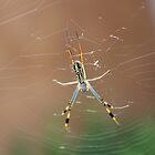 Orbweb Spiderling 1 by Hedgie's Nature & Gardening Journal
