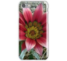 Gazania Gazing (1) iPhone Case/Skin