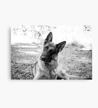 Yes, I know I'm Cute Canvas Print