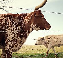 Texas Longhorn Cattle by Trish Mistric