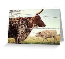 Texas Longhorn Cattle Greeting Card