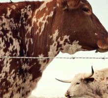 Texas Longhorn Cattle Sticker