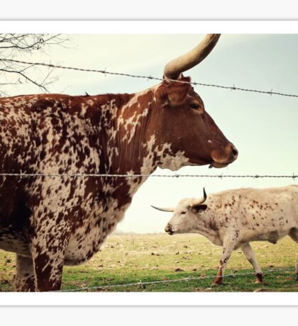 Texas Longhorn Cattle Sticker