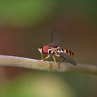 Macro of Hoverfly Warming in the Sun by David Lamb