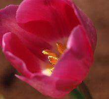 Lipstick Pink by Aileen David