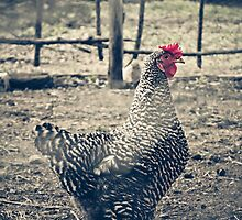 Through the Barb Wire Fence - Sally by Trish Mistric