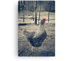 Through the Barb Wire Fence - Sally Canvas Print