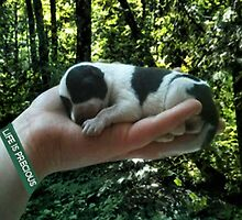 I LEFT FOOTPRINTS IN YOUR HEART EVEN WHILE IM SLEEPING>>LIFE IS PRECIOUS>>DOG -CANINE PICTURE AND OR CARD EC. by ✿✿ Bonita ✿✿ ђєℓℓσ