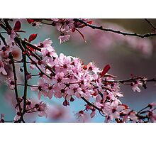 Signs that spring has arrived  Photographic Print