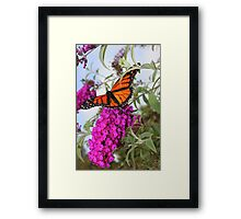 Mountain Monarch Framed Print
