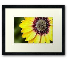 Yellow Osteospermum - Macro Flowers Framed Print