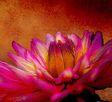 Dahlia Beauty by Fran Riley