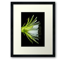 The Night Cactus Framed Print