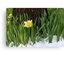 Spring In Colorado Canvas Print
