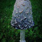 shaggy mushroom by Laura Lea Comeau