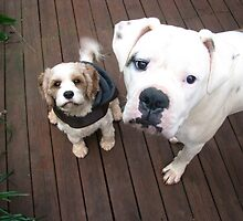 Turvey and Ruby by joeeeey