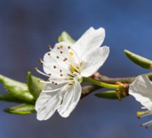 white flowers in spring Sticker