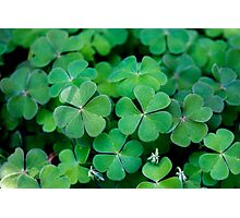 Lucky Clover Photographic Print