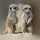 Edited photo of baby Meerkats by ClareLH