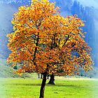 Mountain Maple ~ Ahornboden by ©The Creative  Minds