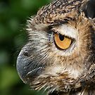 Eagle owl by ClareLH