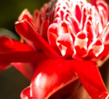Red Flower - Macro Photography Sticker