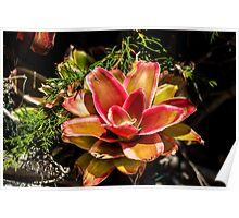 Dream Flower - Nature Photography  Poster
